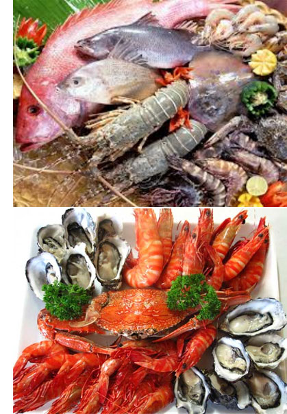 Fresh Seafood Fish Suppliers Melbourne | Melbourne Live Seafoods